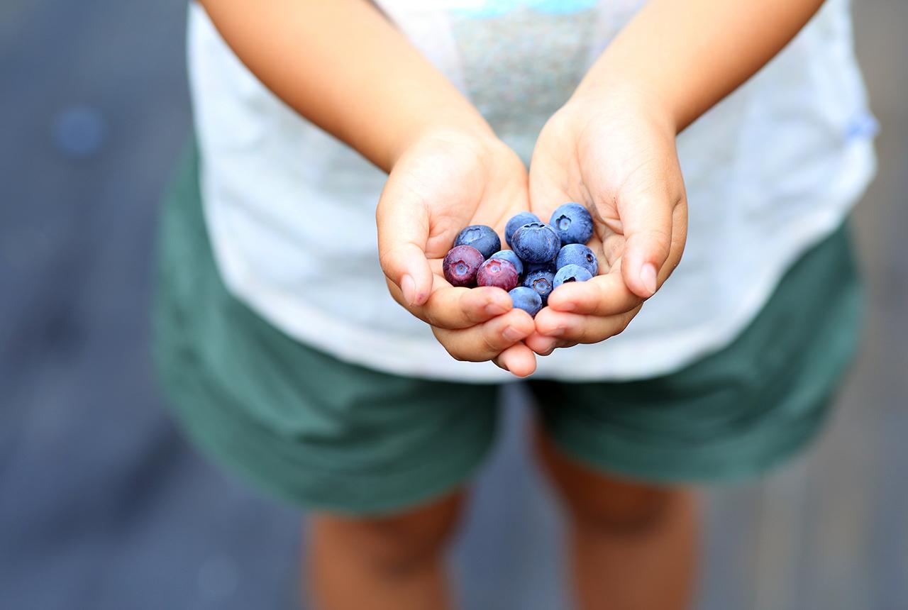 毎日食べたい!スーパーフードとして知られ始めたブルーベリーの健康効果