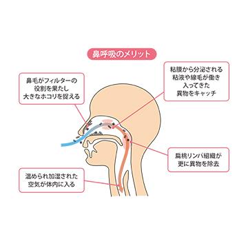 睡眠時の口呼吸がもたらす悪影響とは