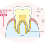 「噛める」って幸せ!歯と歯茎の健康は、美味しさを感じるチカラ
