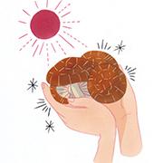 干し椎茸は、天⽇の恵みで栄養素アップ!