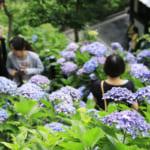 季節を愛で、歴史を楽しむ。新緑の鎌倉散策