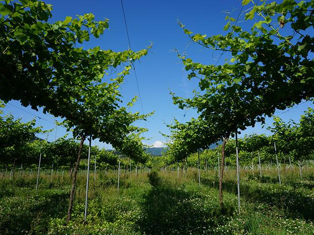 フルーツ王国・山形の美味なる果実の魅力を伝える。ウッディファーム&ワイナリー