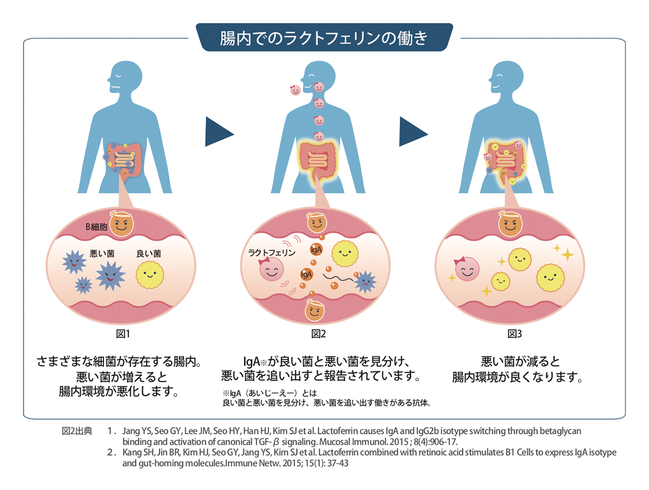 腸内細菌が住み心地良い環境に。ラクトフェリンで積極的な腸育を