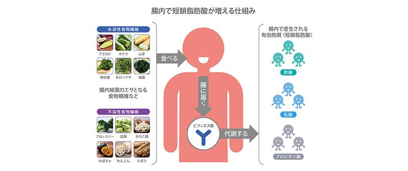 話題の短鎖脂肪酸、増やすキーワードは食物繊維と腸内環境
