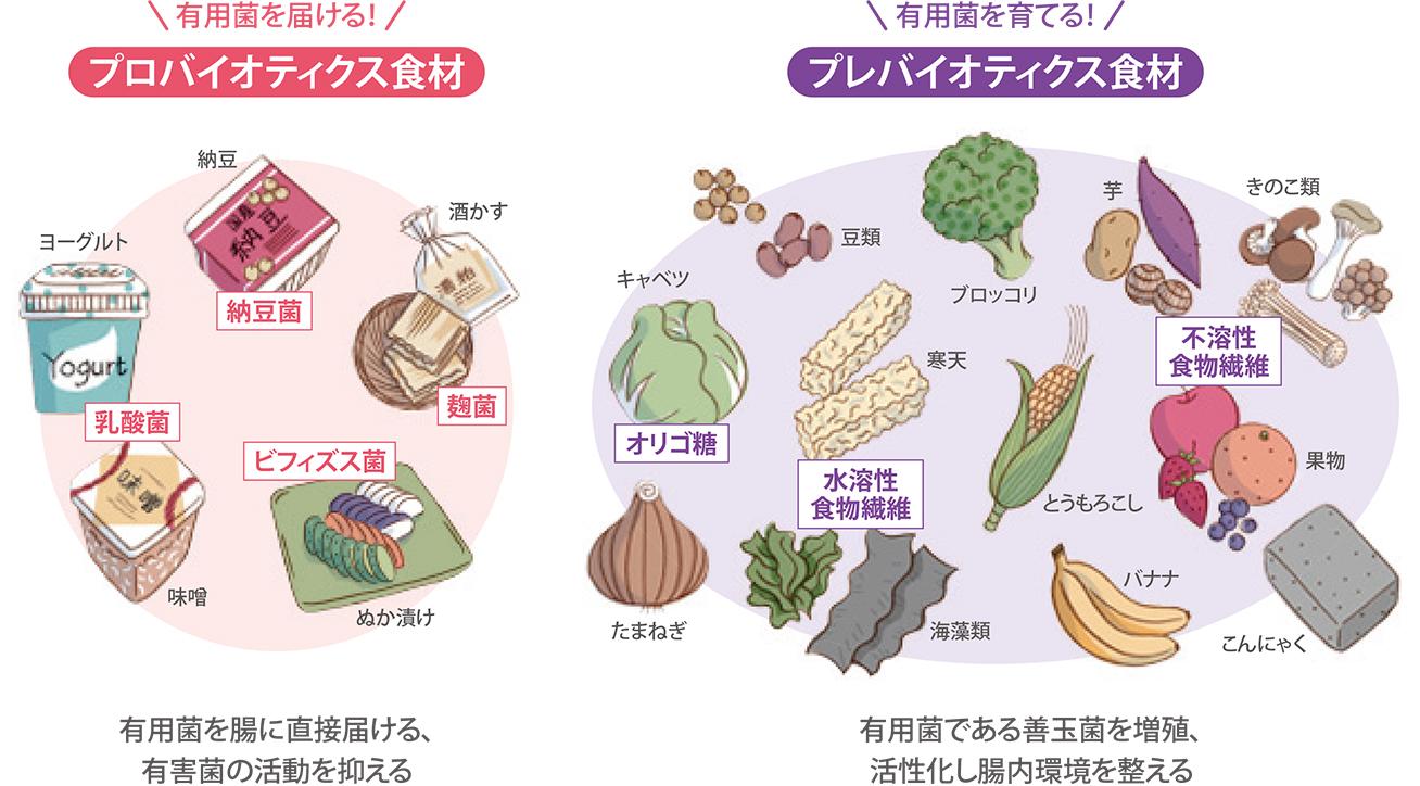 食材でみるプロバイオティクスとプレバイオティクス