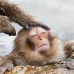 細胞レベルで癒される?!「硫黄呼吸」で読み解く温泉の効能